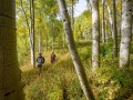 about mile 36 in the 100K course - - Aspen grove at the base of Engineer Mountain